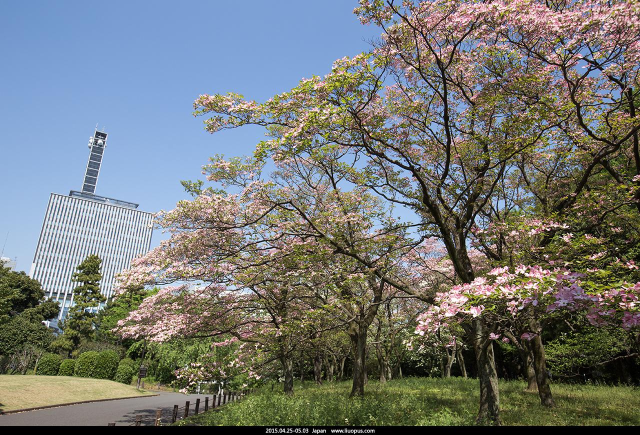 2015.04.25-05.03 日本之行图片小选 - 急冲人鱼 - 若批评不自由,则赞美无意义。