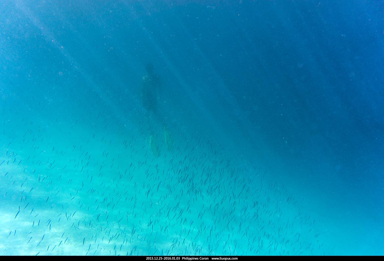 2015.12.25-2016.01.03 菲律宾 科隆 潜水之旅 - 急冲人鱼 - 若批评不自由,则赞美无意义。